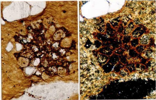 photomicrograph of diaplectic quartz glass, sandstone, Sta. Cruz breccia, Azuara shock