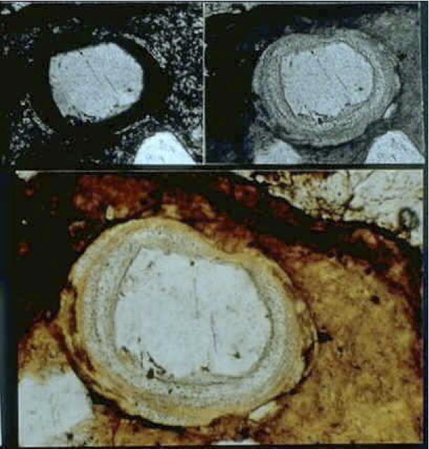 photomicrograph of melt glass coating quartz grain, Sta. Cruz breccia, Azuara shock