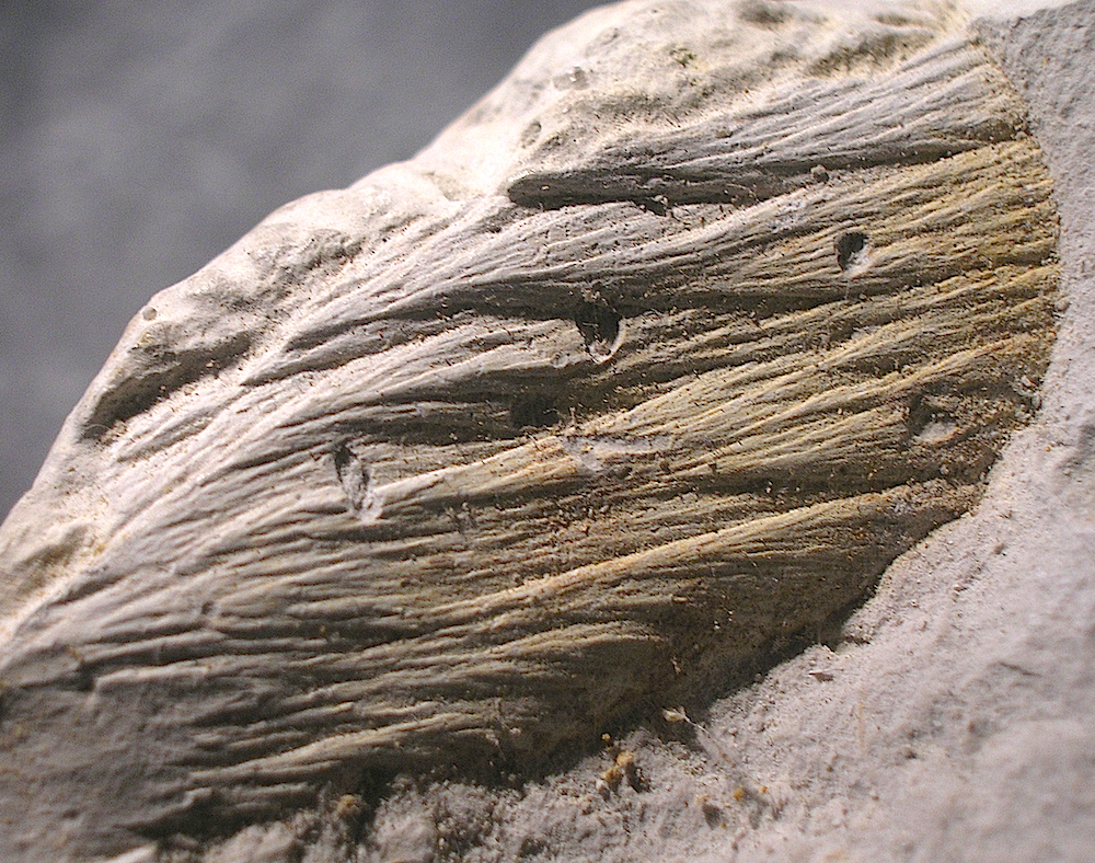 typical horse tail-like fracture markings in fine-grained limestone